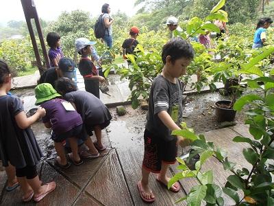 Tk Tarakanita 5 Jakarta Kbtk Berkunjung Kebun Tanggal 14 Maret
