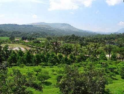Wisata Agro Edukasi Kebun Pasirmukti Bogor Tempat Kab