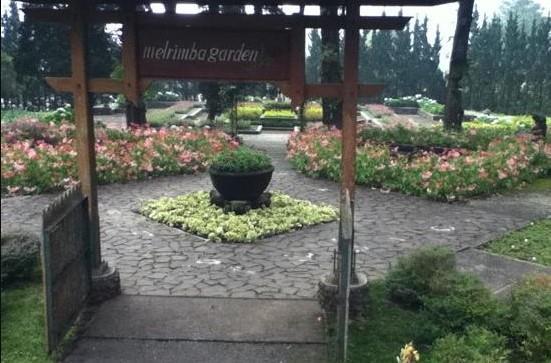 10 Tempat Wisata Bogor Puncak Wajib Dikunjungi Melrimba Garden Kab