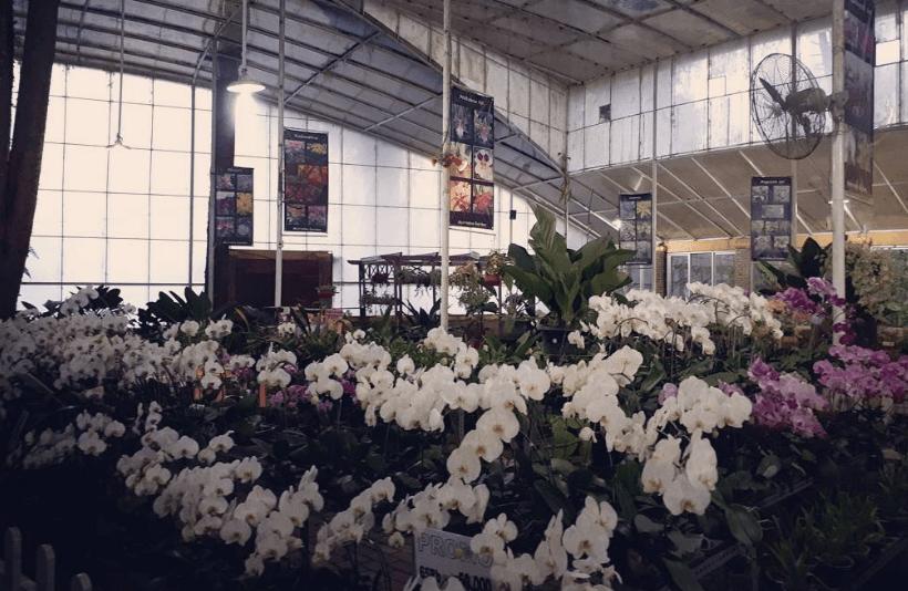15 Tempat Wisata Puncak Instagramable Hits Melrimba Garden Kab Bogor