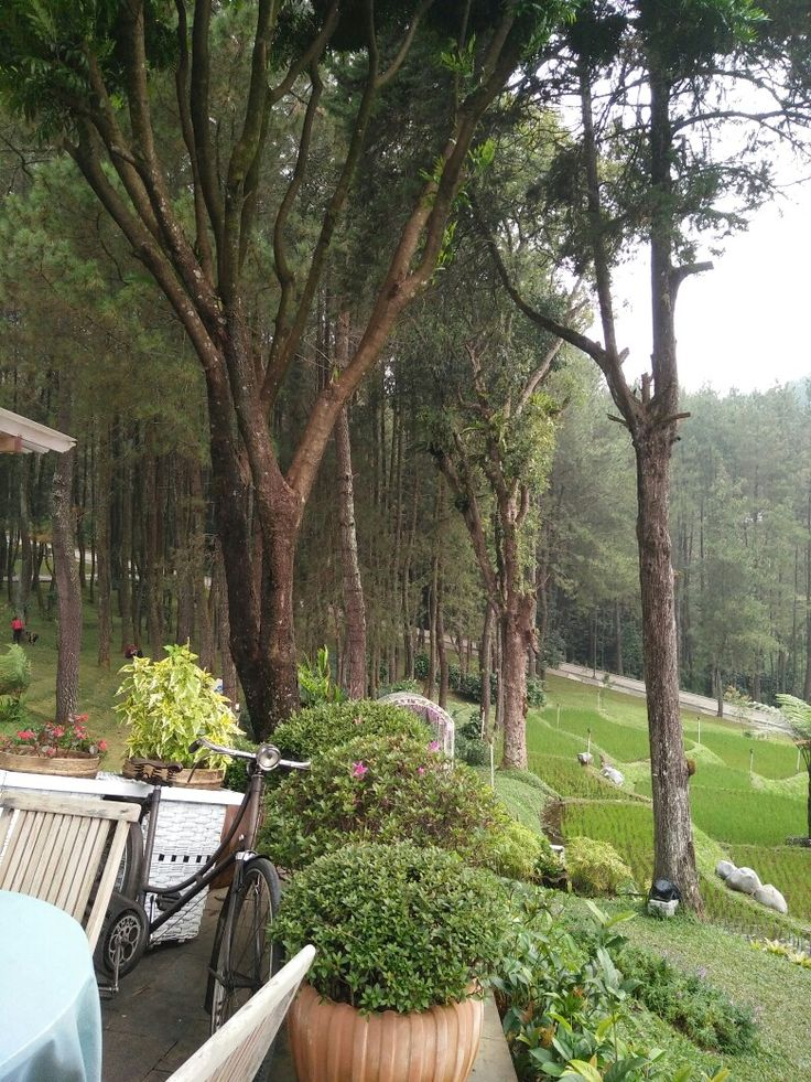 21 Jalurpuncak Images Pinterest Bogor Mansions Villa Pesona Alam Resorts