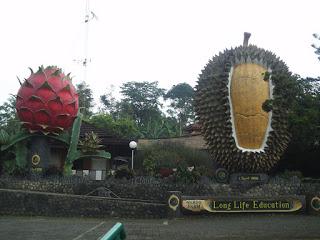 25 Tempat Wisata Puncak Bogor Menarik Hotel Cipelang Kab Perkebunan