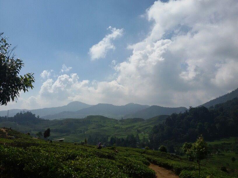 Kebun Teh Tea Garden Puncak Bogor Jawa Barat Indonesia Melrimba