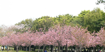 Lokasi Rute Melrimba Garden Bogor Tempat Hits Berlibur Kebun Raya