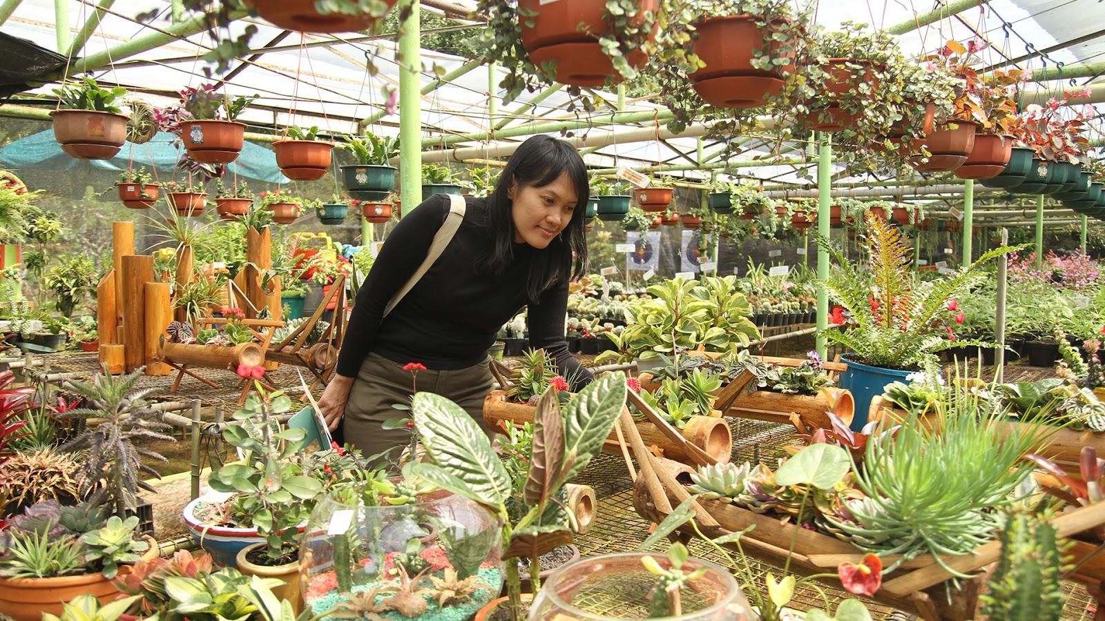 Melrimba Garden Destinasi Wisata Bunga Populer Sebagai Tempat Keluarga Lokasi