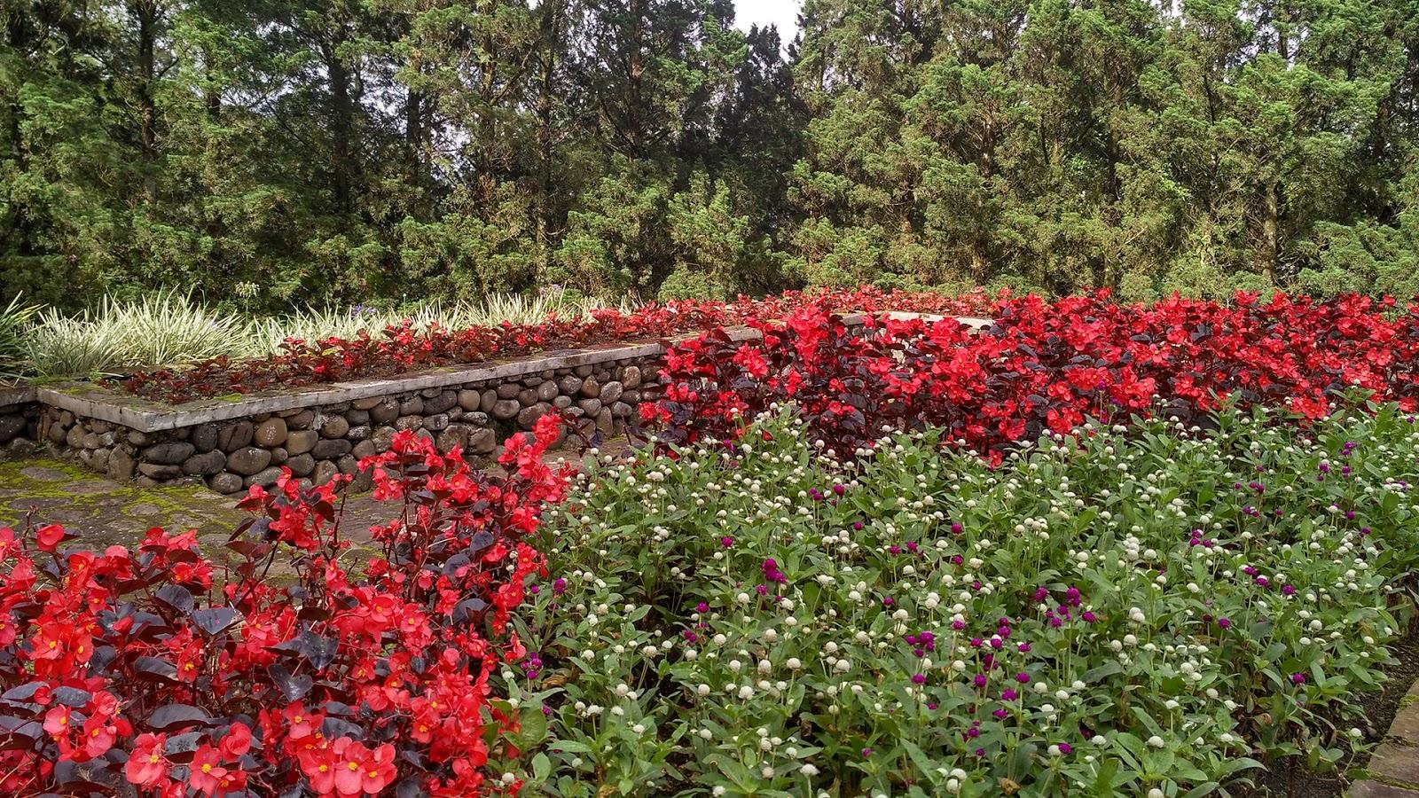 Melrimba Garden Destinasi Wisata Bunga Populer Sebuah Taman Menawarkan Hamparan