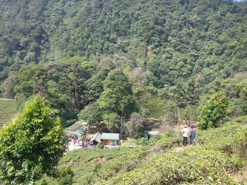Tea Garden Puncak Bogor Jawa Barat Indonesia Pinterest Melrimba Kab