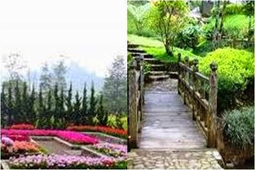 Wisata Puncak Bogor Jawa Barat Info Hotel Villa Spot Taman