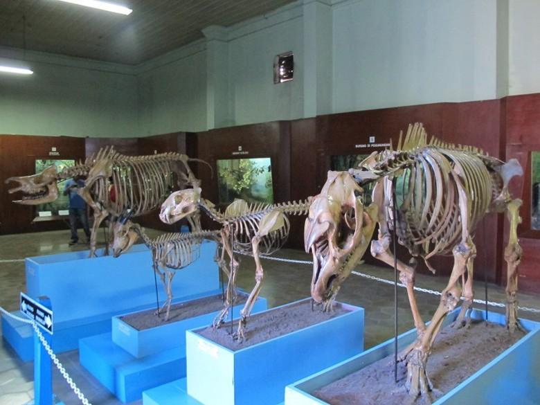 Jangan Lupa Bogor Punya Aneka Museum Keren Tulang Berbagai Fauna