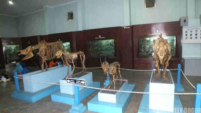 Wisata Budaya Dibogor Thomasesaa Tempat Kota Bogor Musium Etnobotani Kab