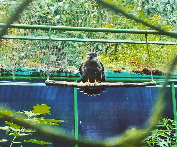 5 Destinasi Wisata Penangkaran Satwa Liar Merahputih Elang Terletak Kampung