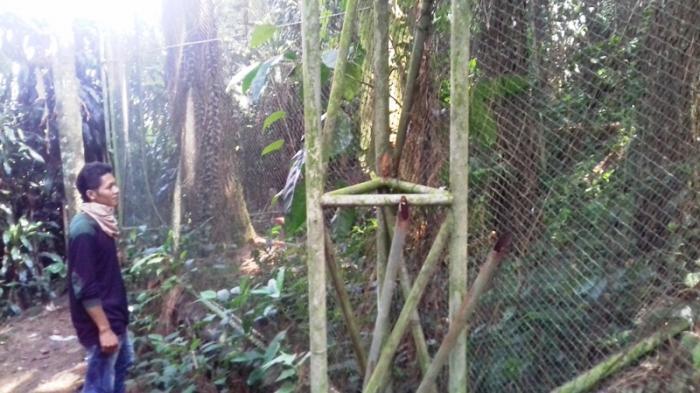 Dulu Memburu Deden Menjadi Penjaga Elang Taman Nasional Pemburu Hewan