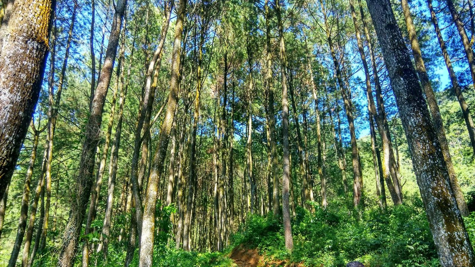 Kotretan Luntang Lantung Penangkaran Elang Loji Alternatif Liburan Hutan Pinus