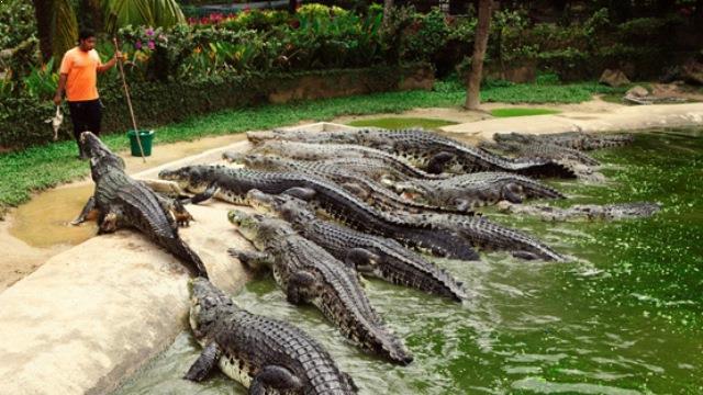 Kunjungi 5 Wisata Penangkaran Hewan Mengerti Taman Buaya Indonesia Elang