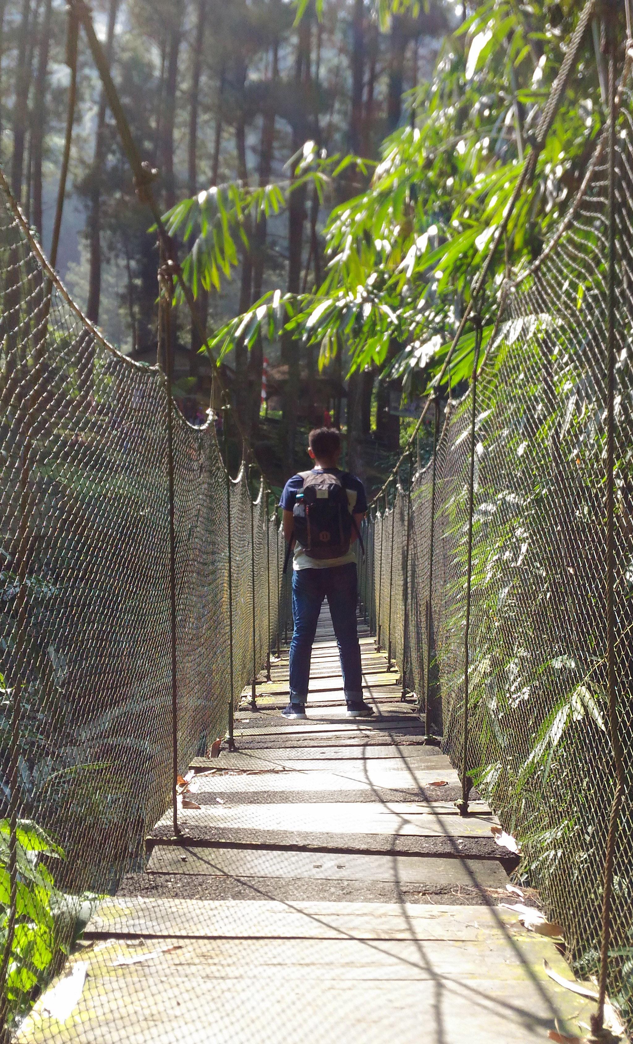 Libur Pencari Suaka Sebelum Menikmati Hutan Pinus Lokasi Camping Ground