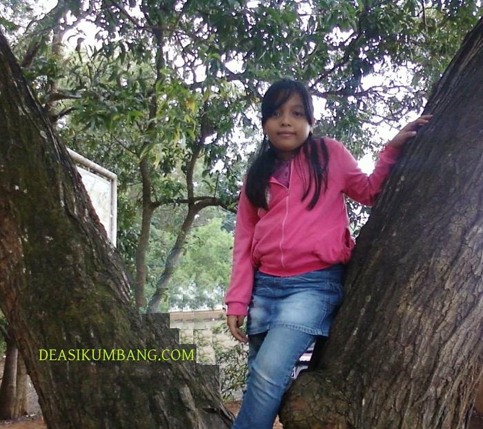 Masuk Penangkaran Elang Hutan Pinus Cigombong Bogor Tiket Loji Kab