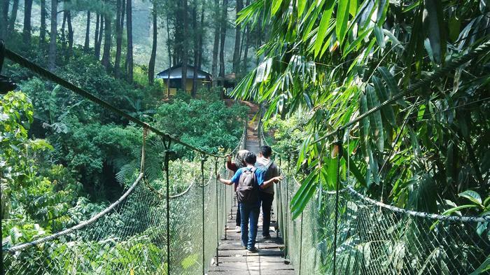 Menengok Penangkaran Elang Menyusuri Jembatan Gantung Bogor Wisata Gunung Halimun