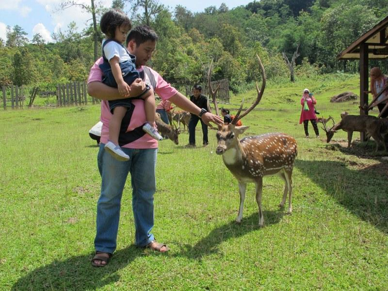 25 Tempat Wisata Bogor Wajib Dikunjungi Penangkaran Rusa Giri Jaya