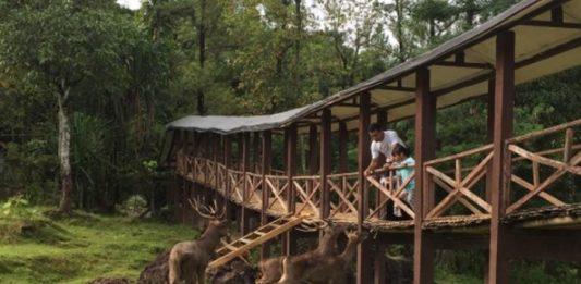 Cari Tempat Wisata Keluarga Pasangan Kota Bogor Penangkaran Rusa Giri
