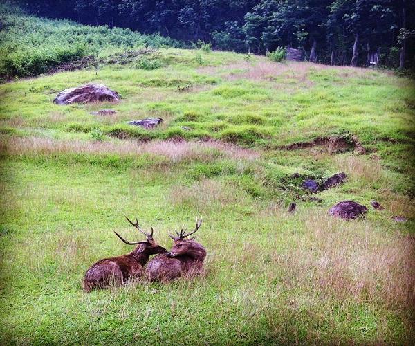 Melepas Lelah Penangkaran Rusa Cariu Bogor Merahputih Giri Jaya Kab