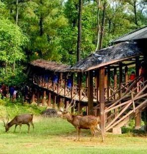 Wahana Wisata Penangkaran Rusa Keindahan Alam Bogor Giri Jaya Cariu