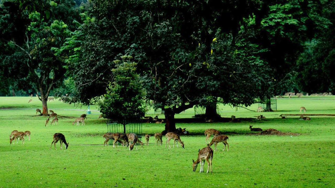 Wisata Seni Budaya Kabupaten Bogor Hutan Lebat Cantik Tengah Kota