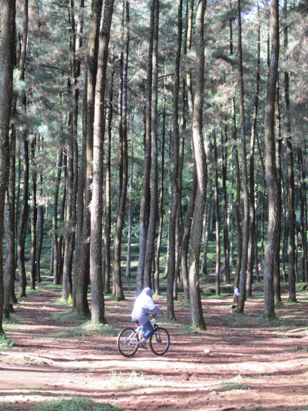 Berbagi Inspirasi Kabur Sejenak Kepenatan Kota Wisata Gunung Setelah Hutan