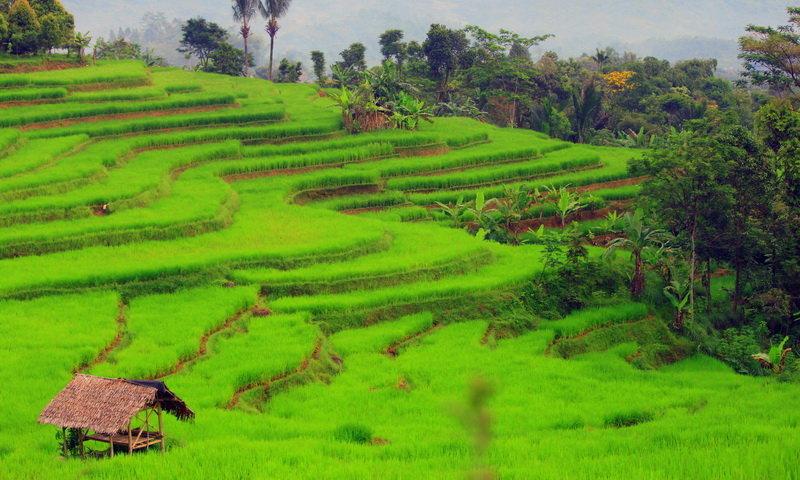 Desa Wisata Kiarasari Pesona Ujung Barat Kabupaten Bogor Lanskap Terasering