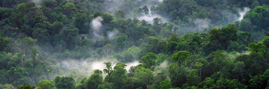 Desa Wisata Tempat Bogor Pegunungan Halimun Petualangan Hutan Air Kab