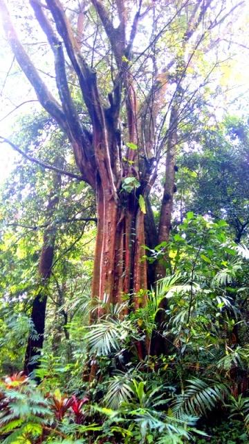 Ekstreem Camping Hutan Panyusupan Cireboner Pohon Gothic Camp Petualangan Air