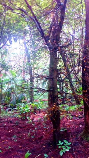 Ekstreem Camping Hutan Panyusupan Cireboner Tropis Banget Petualangan Air Kab