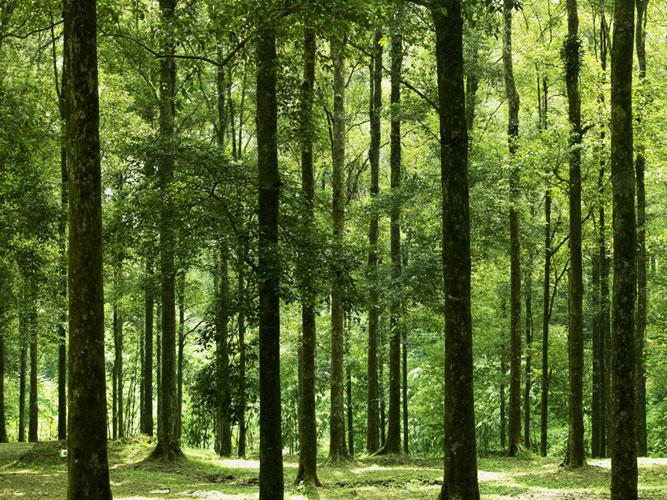 Gunung Bunder Petualang Kere Petualangan Hutan Air Kab Bogor
