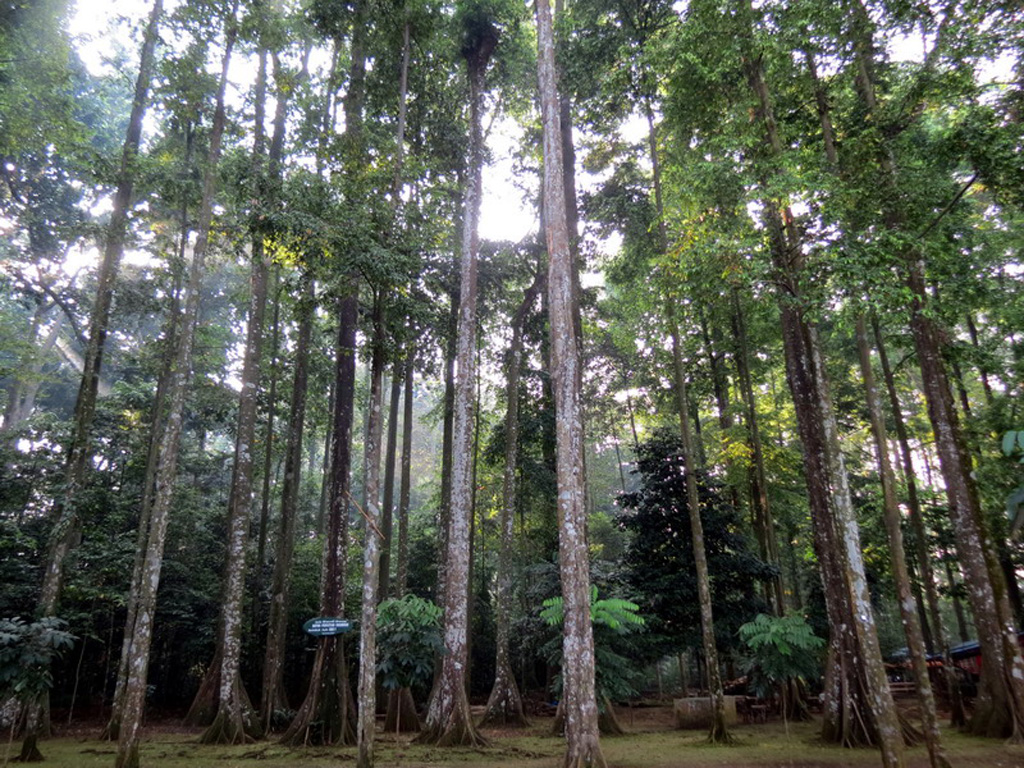 Pariwisata Wisata Alam Hutan Cifor Petualangan Air Kab Bogor
