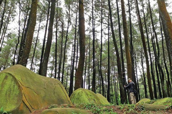 Pinus Air Batu Pesona Petualangan Hutan Kab Bogor