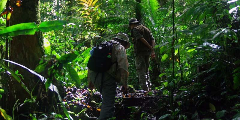 Tempat Wisata Bogor Taman Nasional Gunung Halimun Salak Paket Petualangan