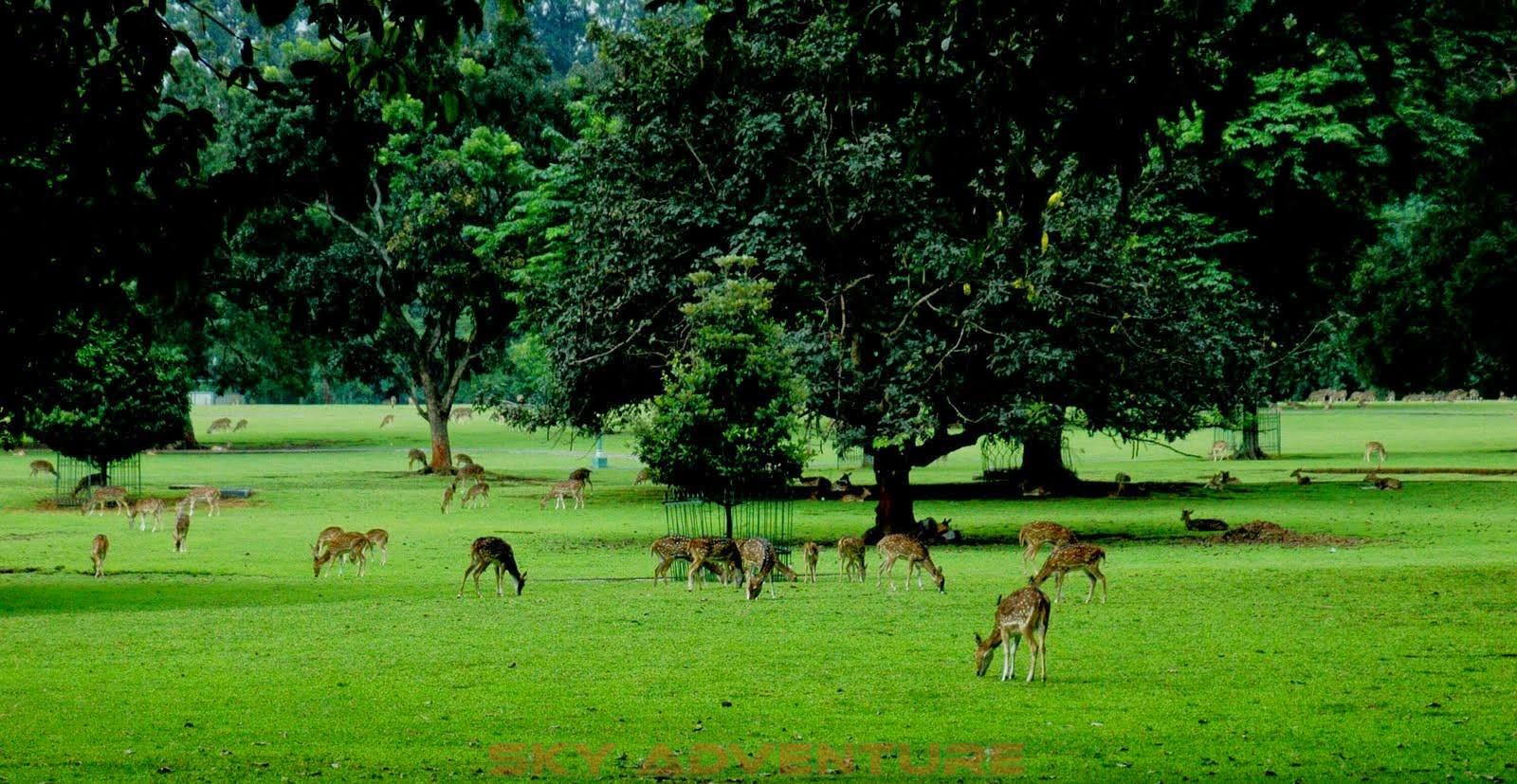 Wisata Kebun Raya Bogor Outbound Lembang Bandung Sky Adventure Petualangan