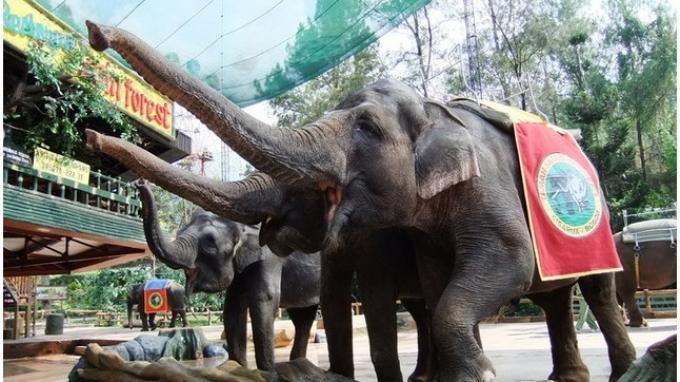 Animal Show Tarian Api Hiburan Andalan Taman Safari Bogor Liburan