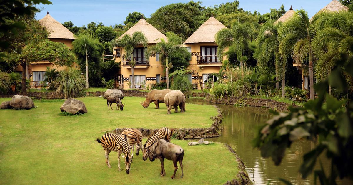 Bali Safari Marine Park Review 13 Fun Kids Love Taman