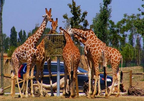 Catatanhariankeong Bersafari Taman Safari Jawa Barat Daerah Wisata Pegunungan Berada