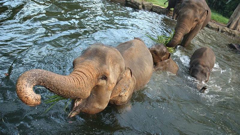 Info Lengkap Taman Safari Bogor Piknikmu Makin Seru Piknik Gajah