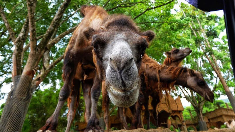 Info Lengkap Taman Safari Bogor Piknikmu Makin Seru Piknik Indonesia