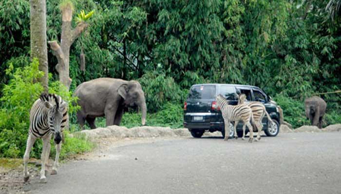 Jelajahi 3 Taman Safari Indonesia Bersama Keluarga Alam Liar 2