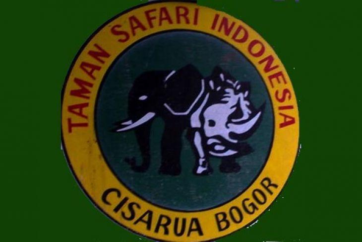 Pengunjung Taman Safari Indonesia Capai 7 000 Antara News Kab