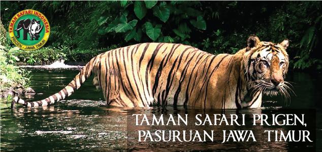 Sekilas Tentang Taman Safari Indonesia Ii Lingkar Pandaan Kab Bogor