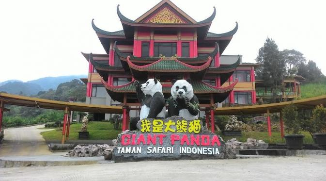 Sepasang Panda Asal China Tiba Taman Safari Bogor September News