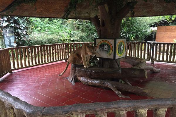 Taman Safari Ii Targetkan Kunjungan Naik 20 Bisnis Martin Sihombing