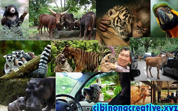 Taman Safari Indonesia Cibinong Creative Kab Bogor