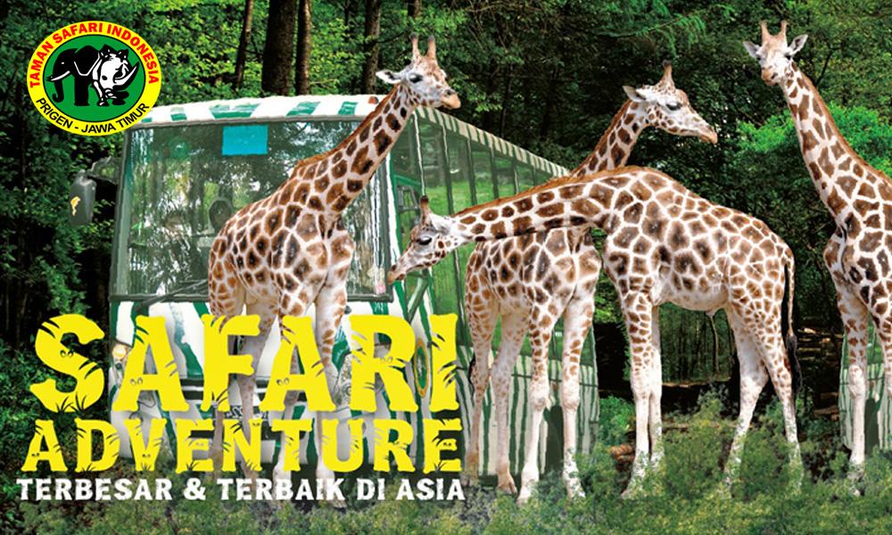 Taman Safari Indonesia Cisarua Bogor Info Destinasi Wisata Jpg Kab