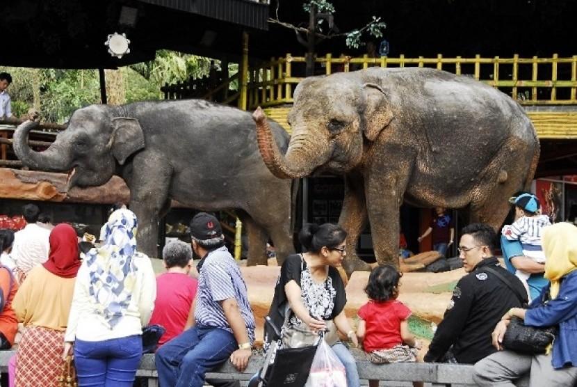 Taman Safari Indonesia Tetap Berlakukan Tarif Normal Republika Online Pengunjung
