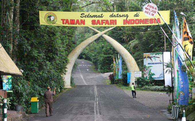 Taman Safari Luncurkan Layanan Rumah Pohon Wartakota Indonesia Kab Bogor
